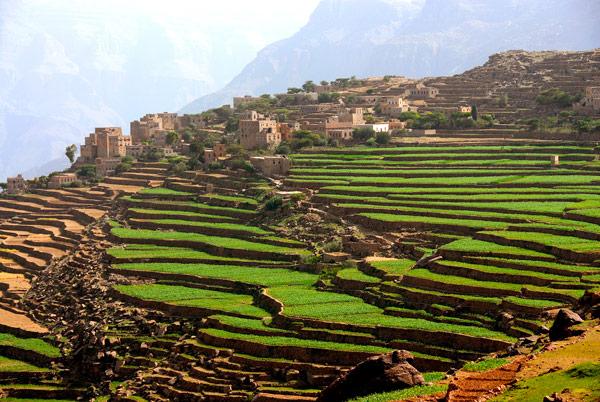 Yemen for Terrace farming model